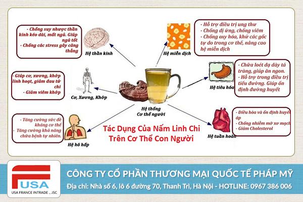 Nấm linh chi tự nhiên Lào